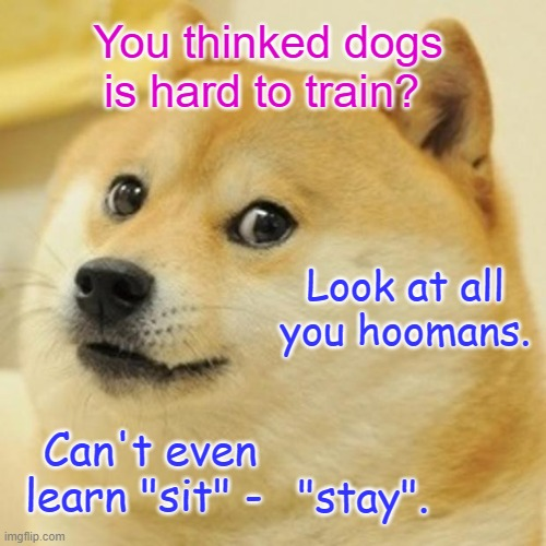 "Doge |  You thinked dogs is hard to train? Look at all you hoomans. Can't even learn ""sit"" -; ""stay"". 