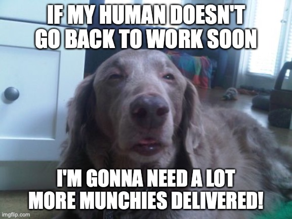 Please Send Munchies! | IF MY HUMAN DOESN'T GO BACK TO WORK SOON I'M GONNA NEED A LOT MORE MUNCHIES DELIVERED! | image tagged in memes,high dog,funny memes,social distancing,out of work | made w/ Imgflip meme maker