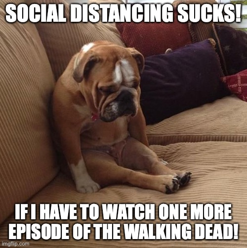 Please No More. |  SOCIAL DISTANCING SUCKS! IF I HAVE TO WATCH ONE MORE EPISODE OF THE WALKING DEAD! | image tagged in bulldogsad,coronavirus,funny memes,social distancing,the walking dead | made w/ Imgflip meme maker