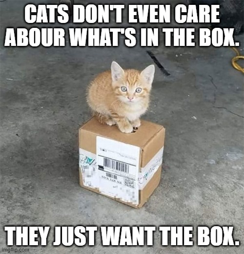 And that's a fact |  CATS DON'T EVEN CARE ABOUR WHAT'S IN THE BOX. THEY JUST WANT THE BOX. | image tagged in cats,facts,boxes | made w/ Imgflip meme maker