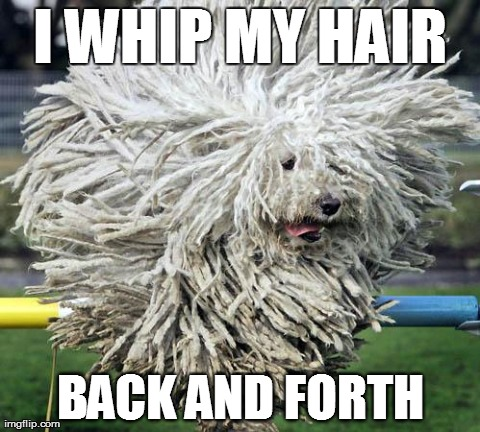 3uljt image tagged in crazy hair dog imgflip