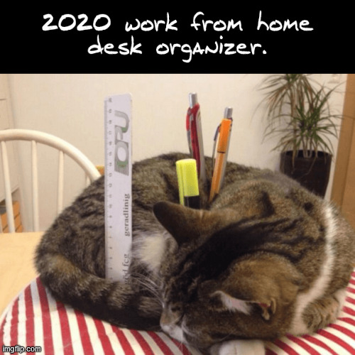 Work from home desk organizer | image tagged in covid-19,work,from,home,desk,cat | made w/ Imgflip meme maker