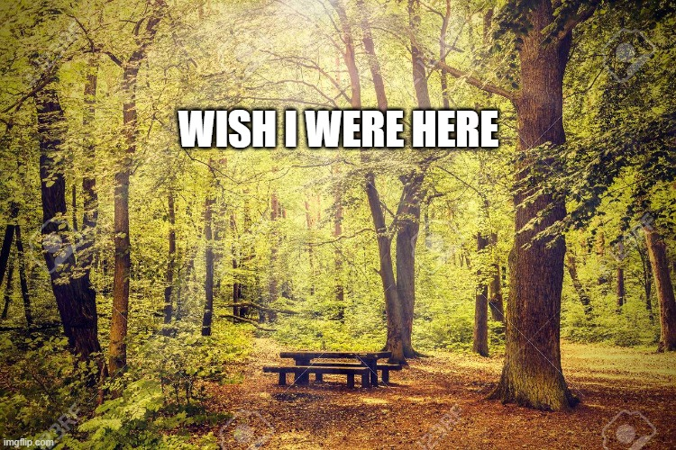 WISH I WERE HERE | image tagged in i wish,peaceful,solitude | made w/ Imgflip meme maker