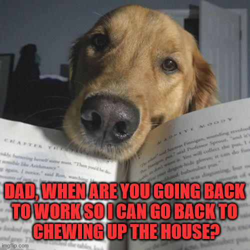 When people actually go back to work, dogs will not know what to do. |  DAD, WHEN ARE YOU GOING BACK  TO WORK SO I CAN GO BACK TO  CHEWING UP THE HOUSE? | image tagged in work,leave me alone,doggo,dog memes | made w/ Imgflip meme maker