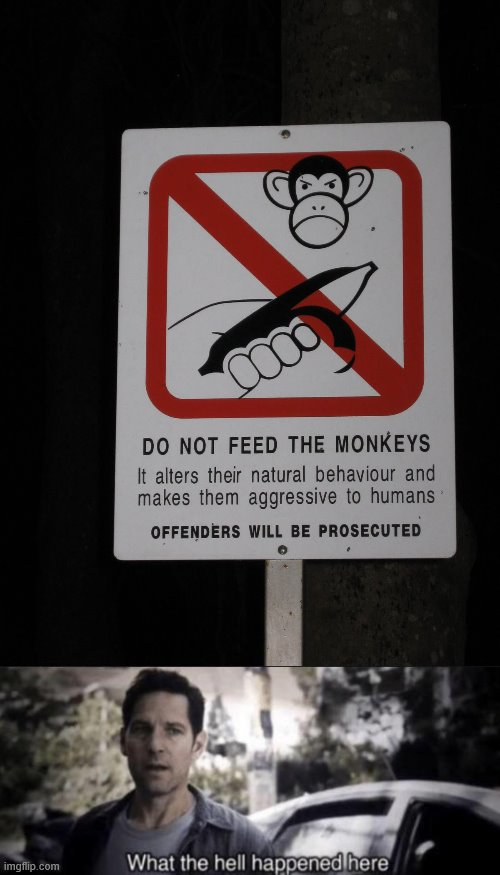 So Monkeys Are Killers? | image tagged in what the hell happened here,hold up,monkeys,why am i doing this,stop reading the tags | made w/ Imgflip meme maker