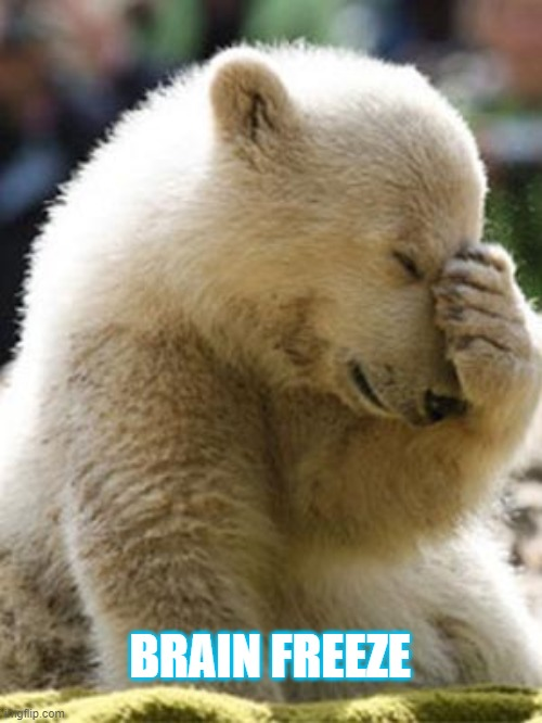 Facepalm Bear |  BRAIN FREEZE | image tagged in memes,facepalm bear | made w/ Imgflip meme maker