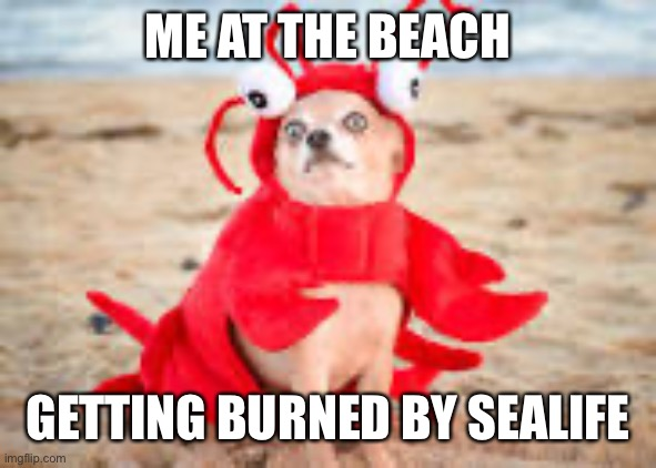 ME AT THE BEACH; GETTING BURNED BY SEALIFE | image tagged in funny dog | made w/ Imgflip meme maker