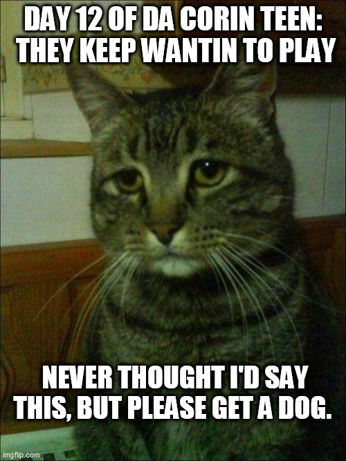 Depressed Cat Meme |  DAY 12 OF DA CORIN TEEN:  THEY KEEP WANTIN TO PLAY; NEVER THOUGHT I'D SAY THIS, BUT PLEASE GET A DOG. | image tagged in memes,depressed cat | made w/ Imgflip meme maker