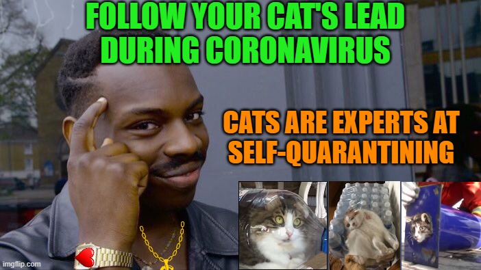 Roll Safe Think About It |  FOLLOW YOUR CAT'S LEAD DURING CORONAVIRUS; CATS ARE EXPERTS AT SELF-QUARANTINING | image tagged in memes,roll safe think about it,coronavirus,quarantine,cats,hand sanitizer | made w/ Imgflip meme maker