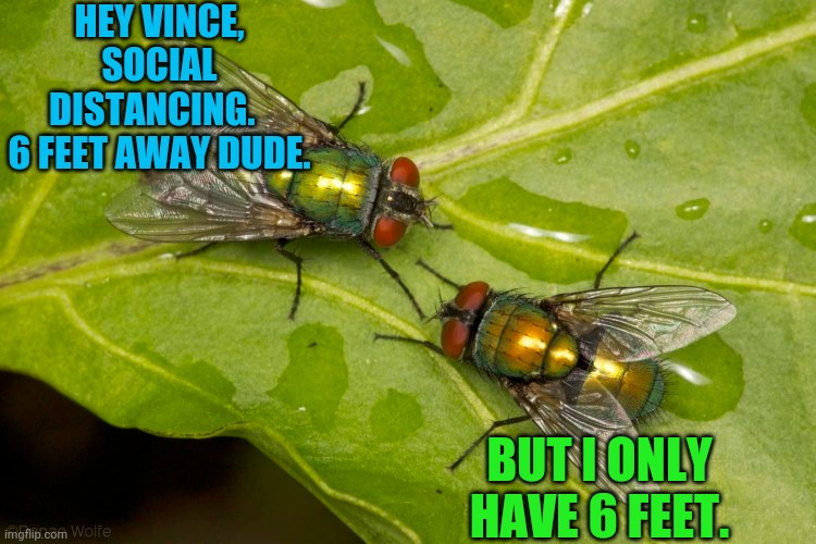 He's Got a Point |  HEY VINCE, SOCIAL DISTANCING.   6 FEET AWAY DUDE. BUT I ONLY HAVE 6 FEET. | image tagged in flies,insects,social distancing | made w/ Imgflip meme maker