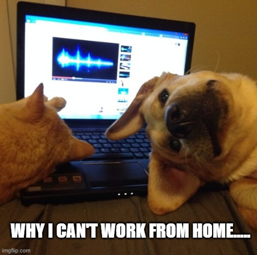 Work from home | WHY I CAN'T WORK FROM HOME..... | image tagged in funny dogs,funny cats,work | made w/ Imgflip meme maker