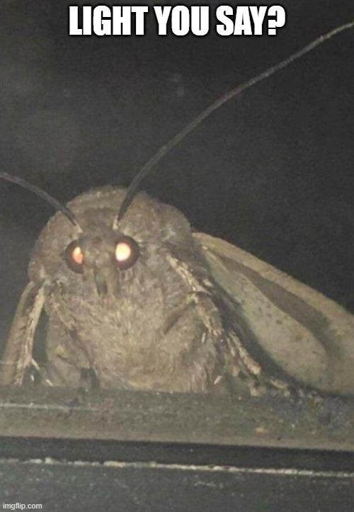 moth light you say? |  LIGHT YOU SAY? | image tagged in moth,moth meme,light,funny | made w/ Imgflip meme maker