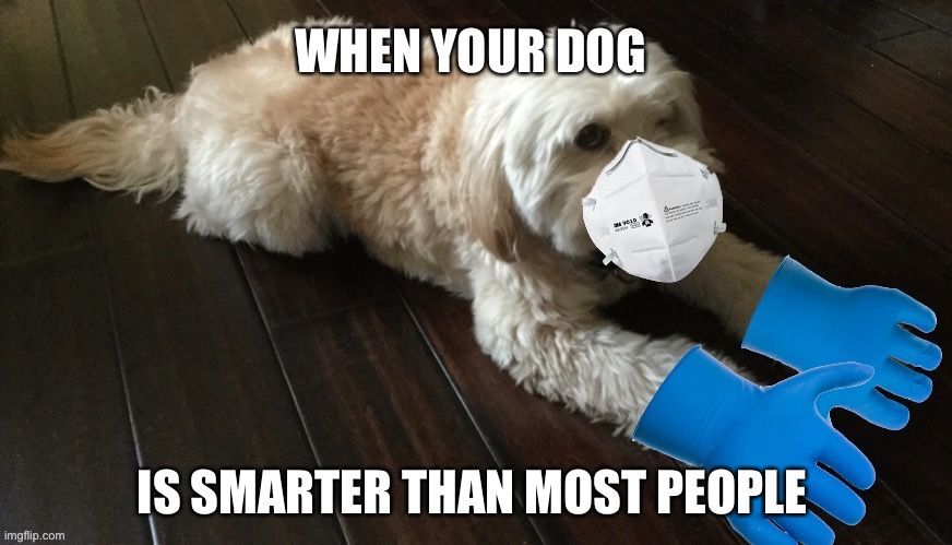When Your Dog Insists On PPE |  WHEN YOUR DOG; IS SMARTER THAN MOST PEOPLE | image tagged in dog with ppe,coronavirus,covid-19,made in china,memes,dogs | made w/ Imgflip meme maker