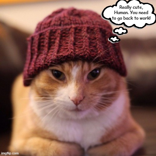 Really cute, Human. You need to go back to work! | image tagged in memes,cats,what cats are thinking,quarantine,covid-19,coronavirus | made w/ Imgflip meme maker