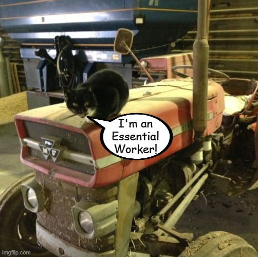 Farm Cat |  I'm an Essential Worker! | image tagged in farm cat,coronavirus,quarantine,memes | made w/ Imgflip meme maker