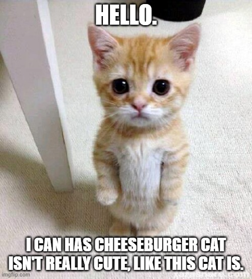 Cute Cat |  HELLO. I CAN HAS CHEESEBURGER CAT ISN'T REALLY CUTE, LIKE THIS CAT IS. | image tagged in memes,cute cat,cheeseburger cat,i can has cheezburger cat,cat memes,kitty | made w/ Imgflip meme maker