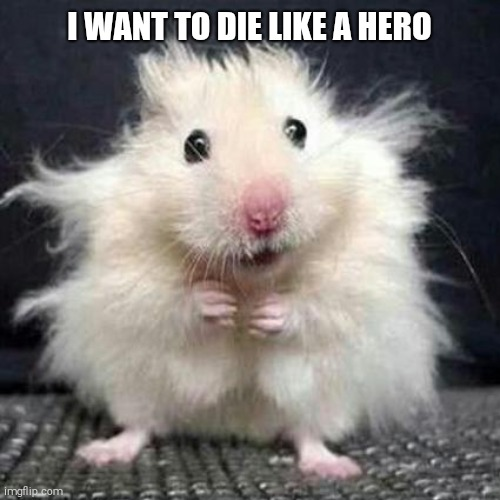 Stressed Mouse |  I WANT TO DIE LIKE A HERO | image tagged in stressed mouse | made w/ Imgflip meme maker