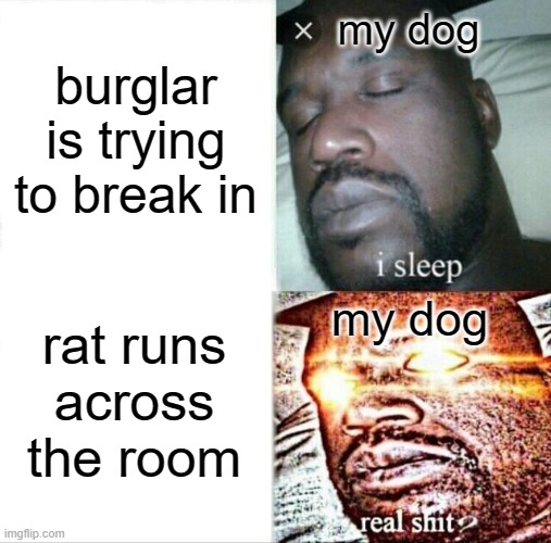 Sleeping Shaq |  my dog; burglar is trying to break in; my dog; rat runs across the room | image tagged in memes,sleeping shaq | made w/ Imgflip meme maker