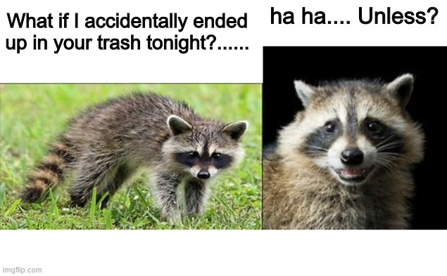Raccoon... Unless? | ha ha.... Unless? What if I accidentally ended up in your trash tonight?...... | image tagged in raccoon,evil plotting raccoon | made w/ Imgflip meme maker