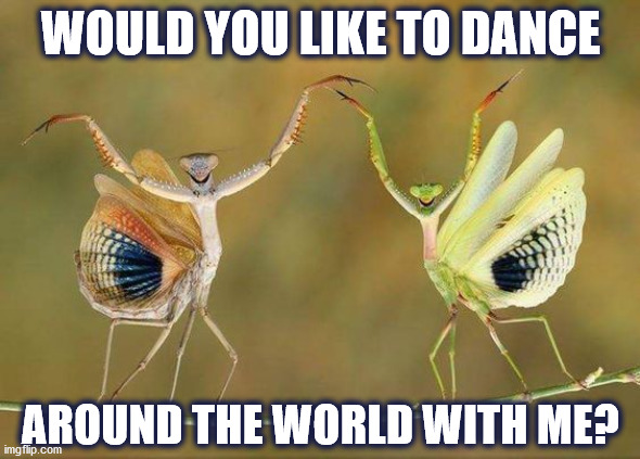 DMB I'll Back You Up |  WOULD YOU LIKE TO DANCE; AROUND THE WORLD WITH ME? | image tagged in dmb,dave matthews band,praying mantis,dance,world,mantis | made w/ Imgflip meme maker