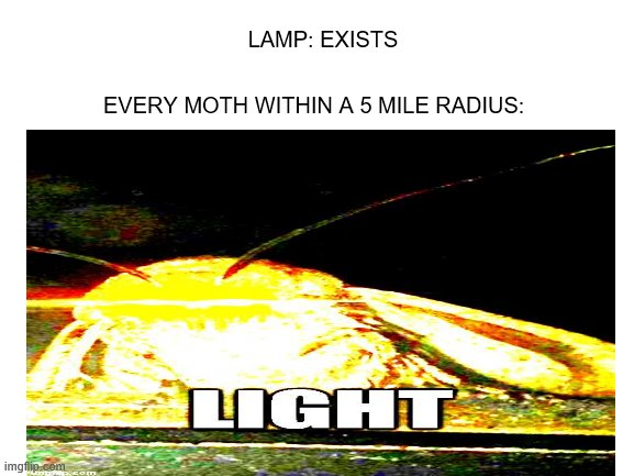 EVERY MOTH WITHIN A 5 MILE RADIUS:; LAMP: EXISTS | image tagged in moth,deep fried | made w/ Imgflip meme maker