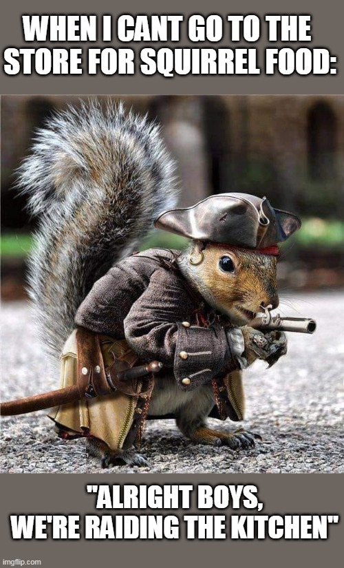 "SQUIRREL PIRATE |  WHEN I CANT GO TO THE  STORE FOR SQUIRREL FOOD:; ""ALRIGHT BOYS, WE'RE RAIDING THE KITCHEN"" 