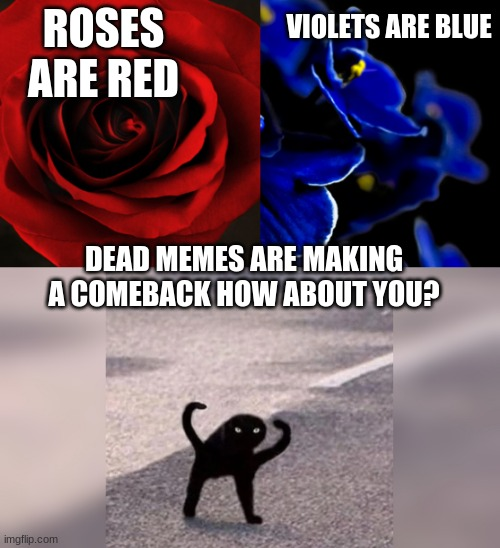 Roses Are Red Violets Are Blue Memes Gifs Imgflip