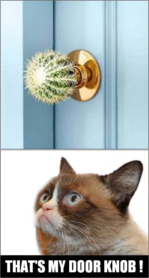 Grumpys Unwanted Visitor Deterrent ! |  THAT'S MY DOOR KNOB ! | image tagged in fun,grumpy cat | made w/ Imgflip meme maker
