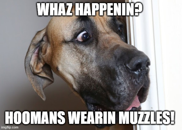 Hoomans Wearin Muzzles! |  WHAZ HAPPENIN? HOOMANS WEARIN MUZZLES! | image tagged in masks,shocked,shocked face,dog,surprised dog | made w/ Imgflip meme maker