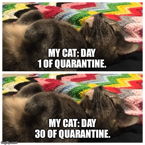 MY CAT: DAY 1 OF QUARANTINE. MY CAT: DAY 30 OF QUARANTINE. | image tagged in quarantine,coronavirus,cats,sleeping | made w/ Imgflip meme maker