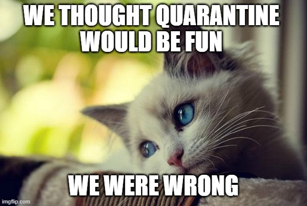 First World Problems Cat |  WE THOUGHT QUARANTINE  WOULD BE FUN; WE WERE WRONG | image tagged in memes,first world problems cat | made w/ Imgflip meme maker
