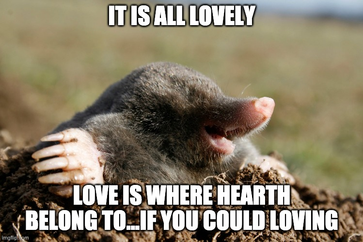 no love, no words, no sleep. Listening your soul. |  IT IS ALL LOVELY; LOVE IS WHERE HEARTH BELONG TO...IF YOU COULD LOVING | image tagged in mole,happiness,love,summer,hello | made w/ Imgflip meme maker