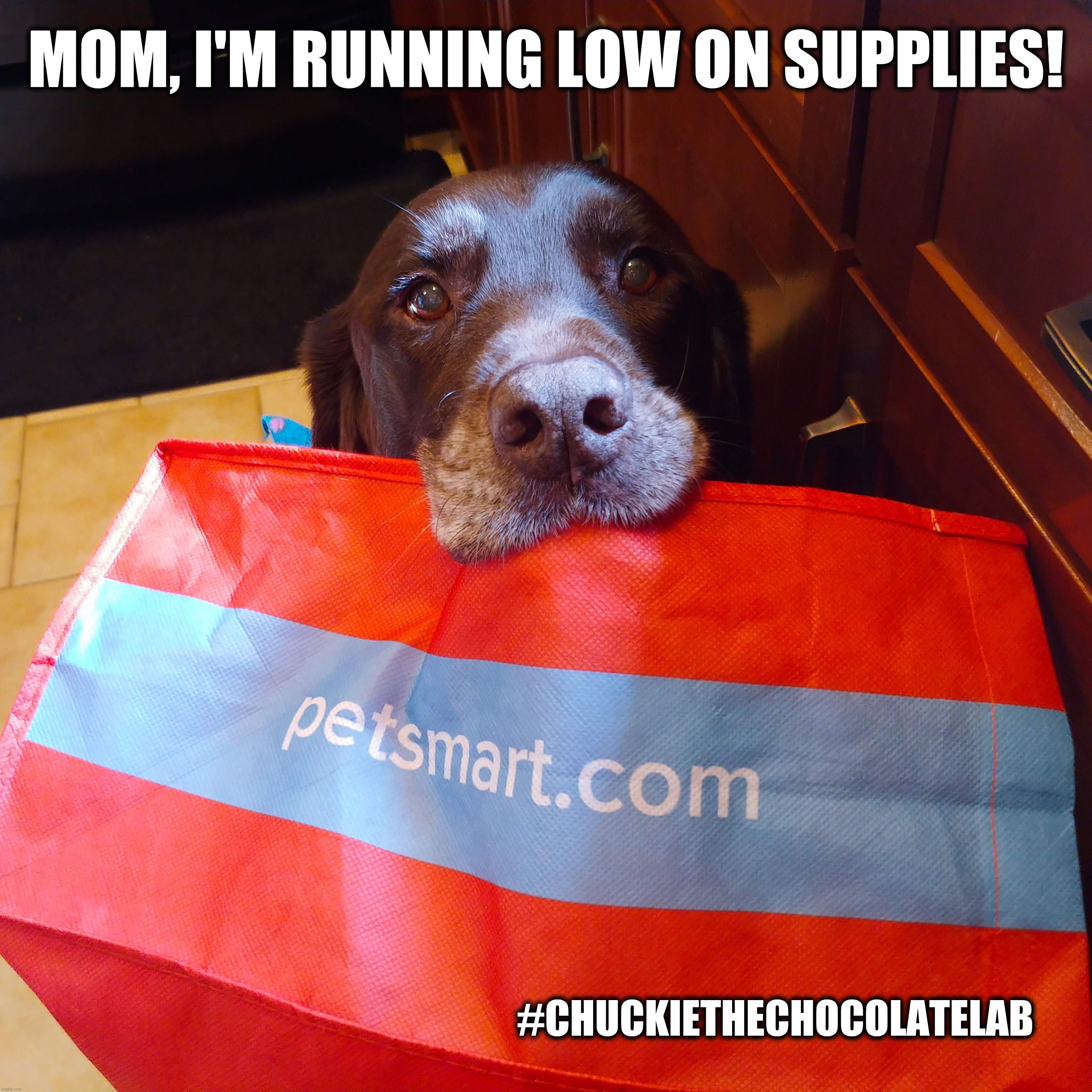 Mom, I'm running low on supplies! |  MOM, I'M RUNNING LOW ON SUPPLIES! #CHUCKIETHECHOCOLATELAB | image tagged in chuckie the chocolate lab,petsmart,pets,store,dogs,funny | made w/ Imgflip meme maker
