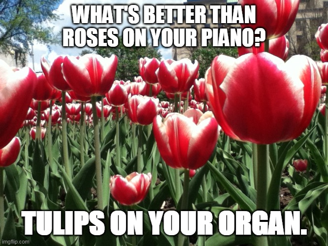 Roses Vs. Tulips | WHAT'S BETTER THAN ROSES ON YOUR PIANO? TULIPS ON YOUR ORGAN. | image tagged in puns,humor,tulips,roses,jokes,laugh | made w/ Imgflip meme maker