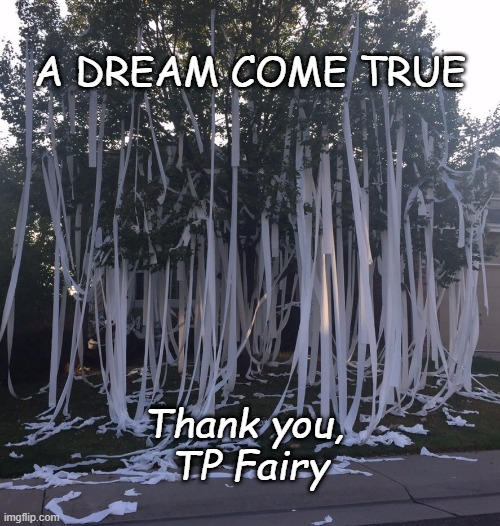 COVID-19 humor |  A DREAM COME TRUE; Thank you,  TP Fairy | image tagged in tp,toilet paper,coronavirus | made w/ Imgflip meme maker