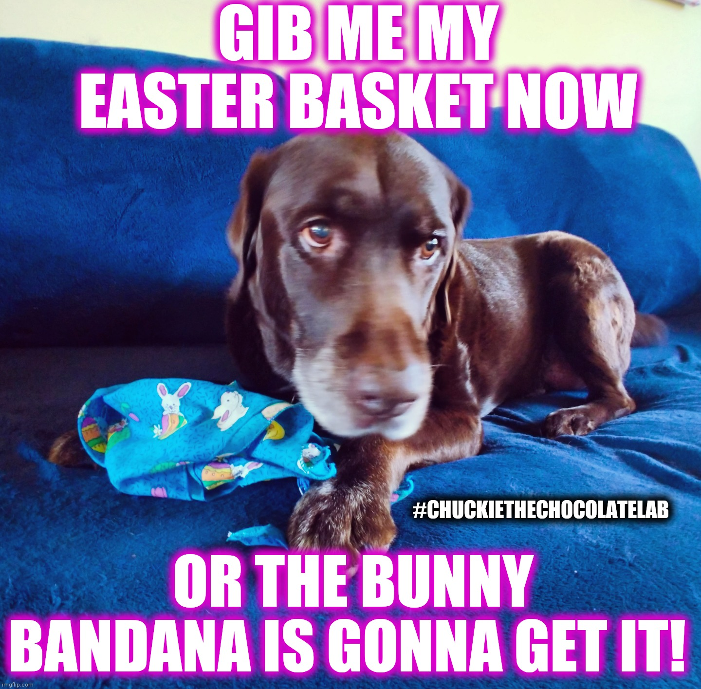 Easter basket or else! |  GIB ME MY EASTER BASKET NOW; #CHUCKIETHECHOCOLATELAB; OR THE BUNNY BANDANA IS GONNA GET IT! | image tagged in chuckie the chocolate lab,easter,funny,dogs,memes,happy easter | made w/ Imgflip meme maker