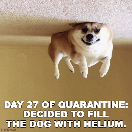Things have been ruff lately... |  DAY 27 OF QUARANTINE: DECIDED TO FILL THE DOG WITH HELIUM. | image tagged in coronavirus,quarantine,stir crazy | made w/ Imgflip meme maker