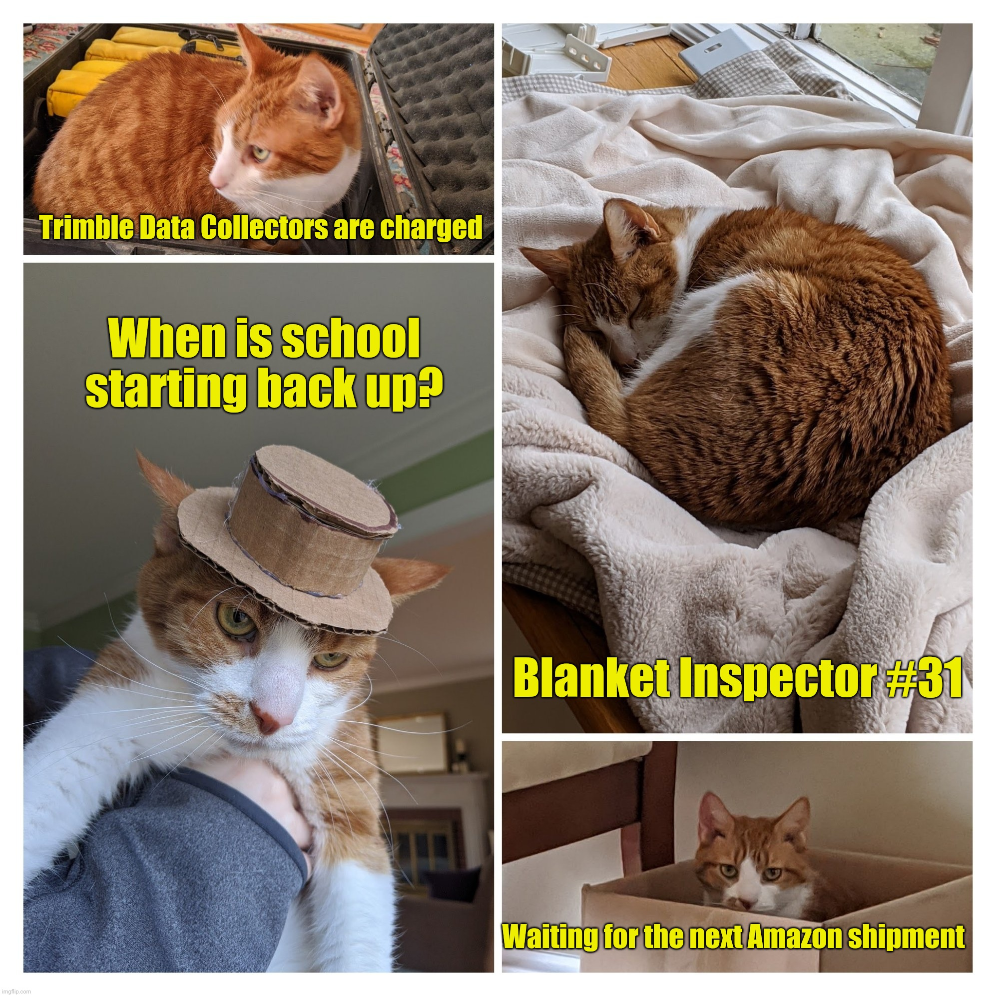 The life of a cat during quarantine |  Trimble Data Collectors are charged; When is school starting back up? Blanket Inspector #31; Waiting for the next Amazon shipment | image tagged in cats,coronavirus,quarantine,cabin fever | made w/ Imgflip meme maker