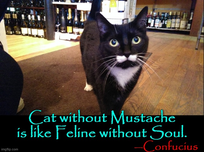 Girls love my Mustache... Meow! | —Confucius Cat without Mustache is like Feline without Soul. | image tagged in vince vance,cats,mustache,confucius says,feline,funny cat memes | made w/ Imgflip meme maker