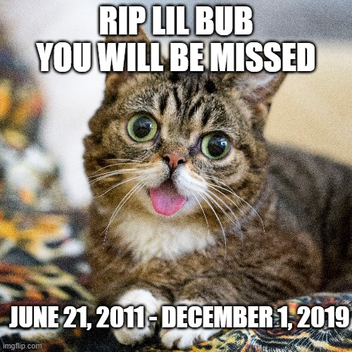Thank you for being adorable, Bub. |  RIP LIL BUB YOU WILL BE MISSED; JUNE 21, 2011 - DECEMBER 1, 2019 | image tagged in cat,lil bub | made w/ Imgflip meme maker
