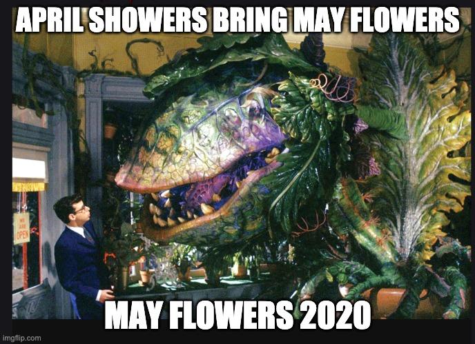 May Flowers 2020 Imgflip