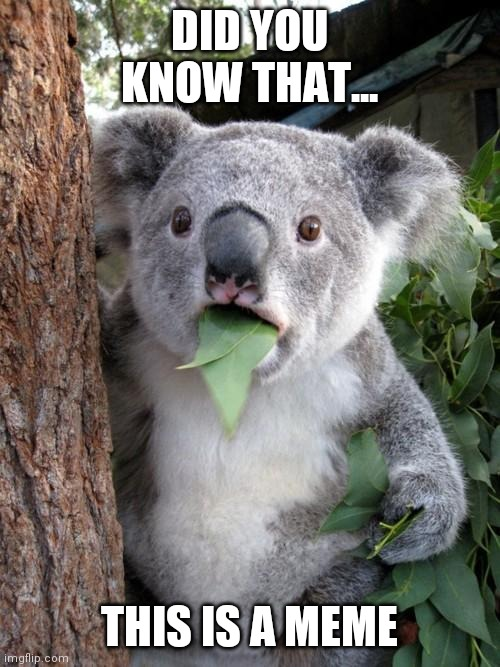 Surprised Koala |  DID YOU KNOW THAT... THIS IS A MEME | image tagged in memes,surprised koala | made w/ Imgflip meme maker