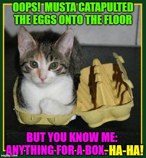 Here's that box U been wanting 2 get 4 me. A thank U would be nice |  OOPS!  MUSTA CATAPULTED THE EGGS ONTO THE FLOOR; BUT YOU KNOW ME:       ANYTHING FOR A BOX. HA-HA! HA-HA! | image tagged in vince vance,egg,carton,funny cat memes,cat in a box,i love cats | made w/ Imgflip meme maker