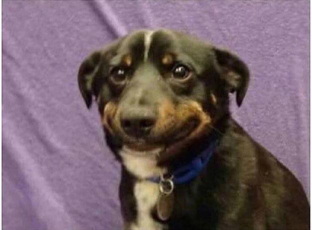 Happy sad dog Blank Template - Imgflip