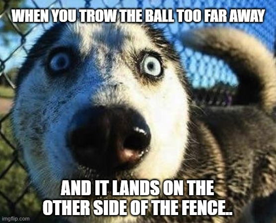 Scared dog |  WHEN YOU TROW THE BALL TOO FAR AWAY; AND IT LANDS ON THE OTHER SIDE OF THE FENCE.. | image tagged in scared dog | made w/ Imgflip meme maker