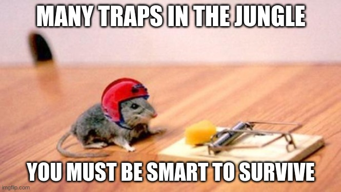 Mouse Trap |  MANY TRAPS IN THE JUNGLE; YOU MUST BE SMART TO SURVIVE | image tagged in mouse trap | made w/ Imgflip meme maker