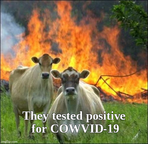Evil Covid-19 Cows |  They tested positive  for COWVID-19 | image tagged in memes,evil cows,fun,politics,covid-19 | made w/ Imgflip meme maker