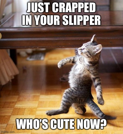 Revenge kitty |  JUST CRAPPED IN YOUR SLIPPER; WHO'S CUTE NOW? | image tagged in cat walking like a boss,revenge,revolution,cute cat,cute | made w/ Imgflip meme maker