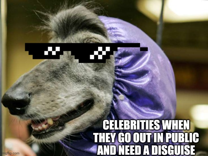 Funny dog |  CELEBRITIES WHEN THEY GO OUT IN PUBLIC AND NEED A DISGUISE | image tagged in funny dog | made w/ Imgflip meme maker
