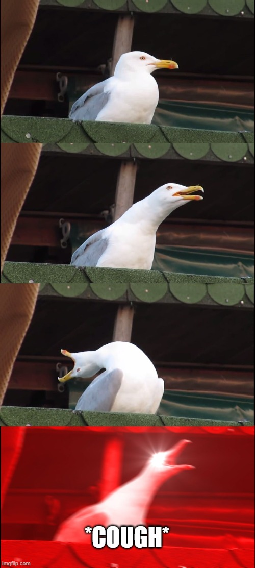 Inhaling Seagull |  *COUGH* | image tagged in memes,inhaling seagull | made w/ Imgflip meme maker